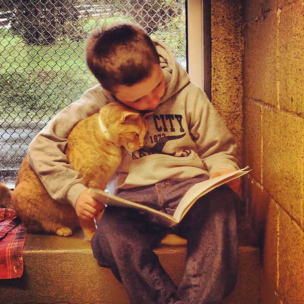 Kids spend time and read books to shelter cats.